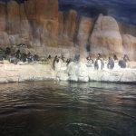 Top Zoo